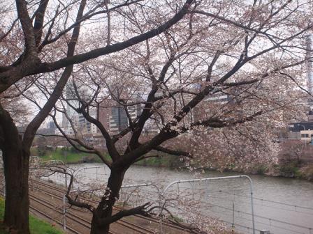 川沿いの桜道