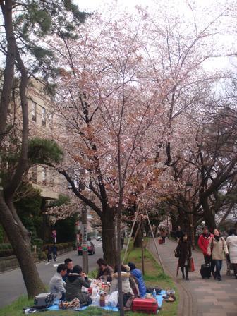 桜の花見風景